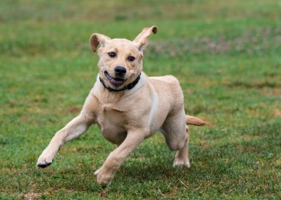 CVETS-Overly-Excited-Dog