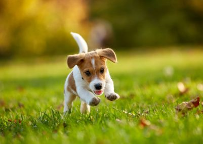 how-to-manage-your-puppys-first-trip-to-the-dog-park-5c385fbe6d254